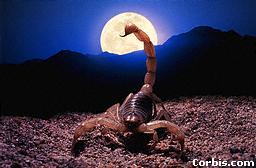 Scorpion and Full Moon